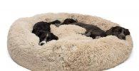 cama donut para bulldog inglés muy suave y lavable