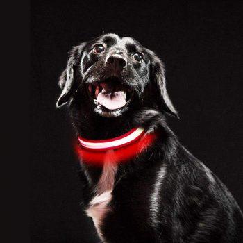 collar bulldog ingles con led recargable evitar artopellos collar para bulldog  reflectante