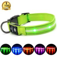 COLLAR PARA BULLDOG INGLES CON LUCES LED SEGURIDAD PERROS