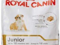 alimentacion para bulldog ingles el mejor pienso seco royal canin junior