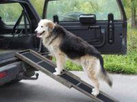 Rampa de madera para perros con dificultad para subir al coche