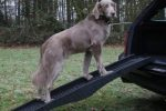 Rampa plegable coche 40x120cm para perros