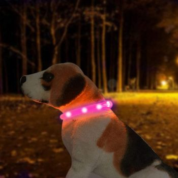 collar led bulldog ingles collar para perros collares y arneses para bulldog ingles collares y arneses para perros luces LED