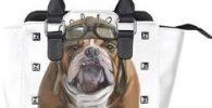 Bolso mujer blanco con bulldog aviador