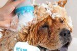 Cepillo de Goma para Mascotas con dispensador de champu Integrado