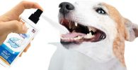 Dental Spray Perro