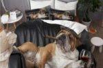 Bedding Juego de Funda de Edredon con bulldog ingles elegante