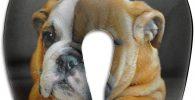 Cojin de Espuma viscoelastica para cuello con cachorro bulldog ingles