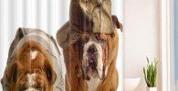 Cortina de bano bulldogs ingleses 183X183CM