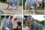 Disfraz para bulldog ingles de camarero con esmoquin