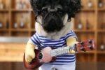 Disfraz para bulldog ingles de guitarrista