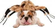 Disfraz para bulldog ingles de arana gigante