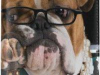 Funda de pasaporte de microfibra con bulldog