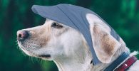 Gorra de beisbol y visera para perros