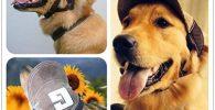 Gorra protectora para perros