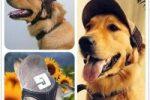 Gorra protectora para perros ropa perros ropa bulldog ingles