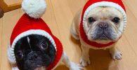Gorro de navidad para bulldogs