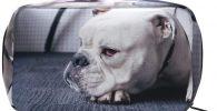 Neceser de viaje de bulldog ingles