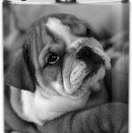 Petaca para licor de acero inox con cachorro bulldog ingles