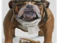 Posavasos de ceramica con bulldog ingles aviador