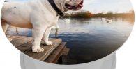 Soporte para smartphone diseno de bulldog ingles blanco