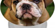 Soporte para telefono movil diseno de bulldog ingles