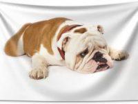 Tapiz bulldog ingles tumbado 230x140cm