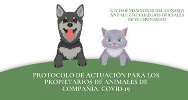 protocolo de actuacion ante el covid-19 para los propietarios de animales de compania gatos perros coronavirus transmision