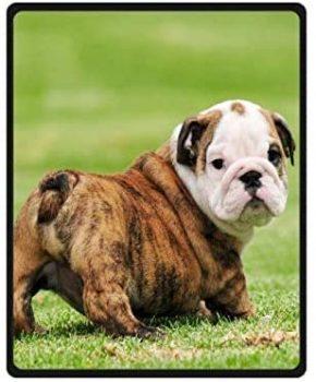 manta con diseno bulldog ingles cachorro puppy