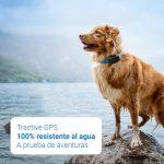 localizador gps para perro resistente al agua